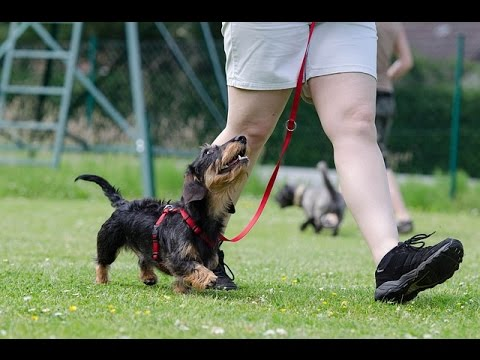 Why Is Dog Obedience Training So Important?