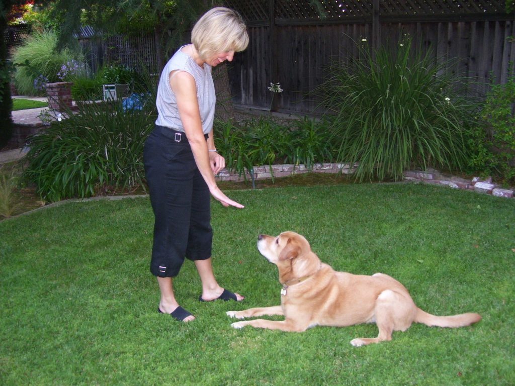 Tips For Puppy Dog Training